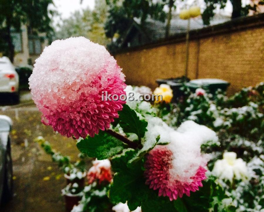2015北京首降初雪,比暖气来的早